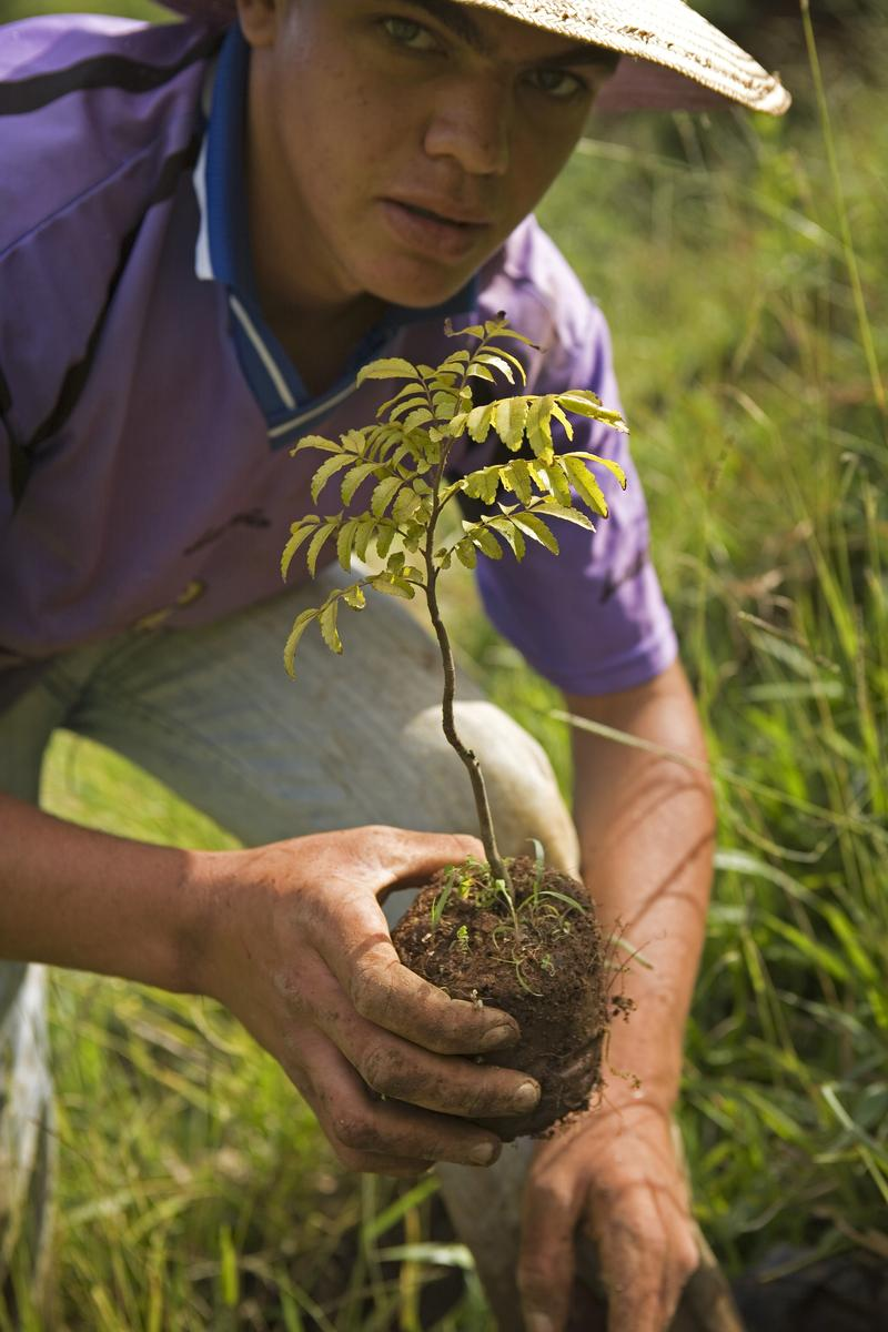 ecosia-tree-planting-brazil-atlantic-forest-06