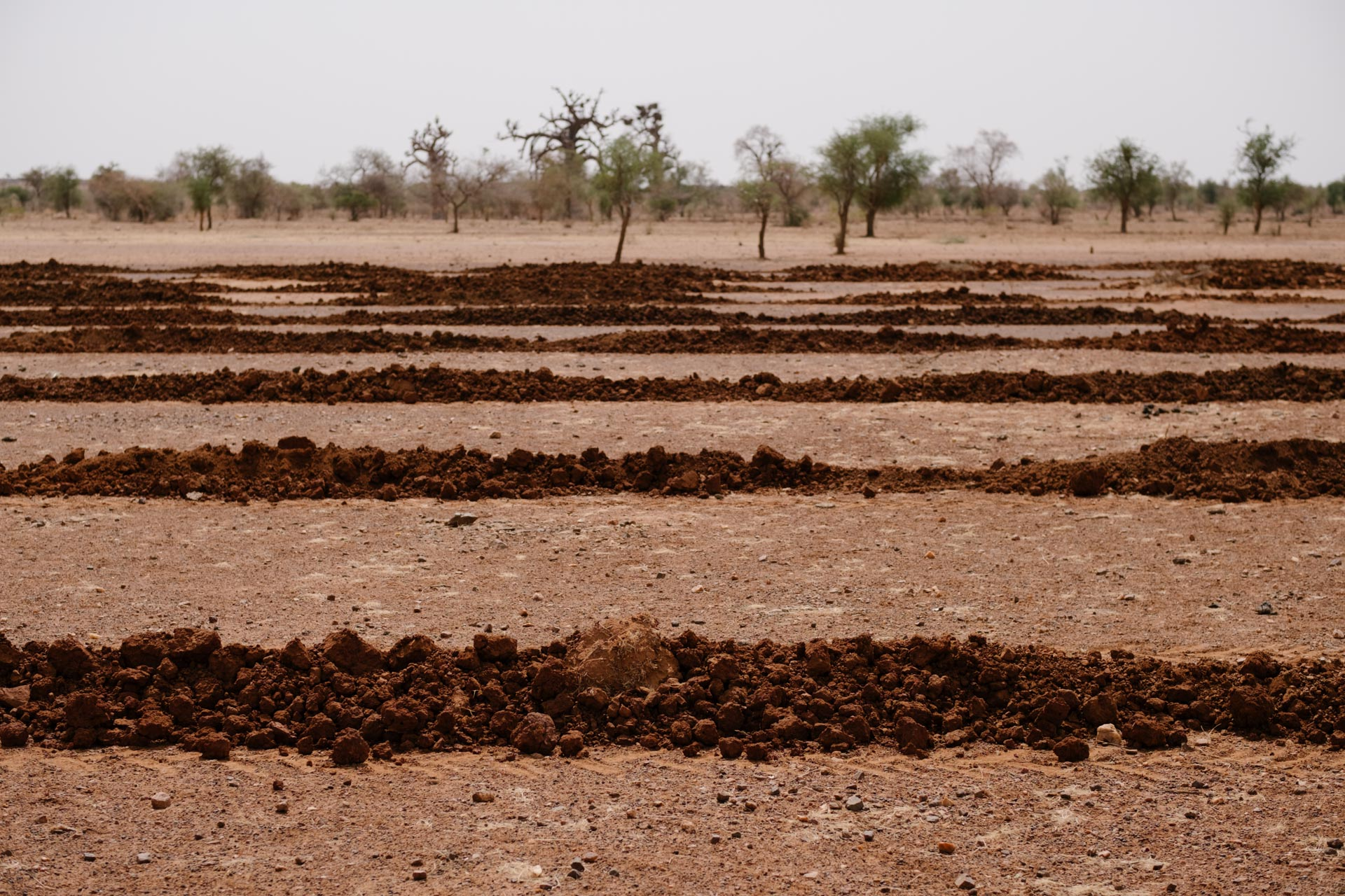 Burkina-Faso-Trees-Reforestation-Ecosia--24-of-38-