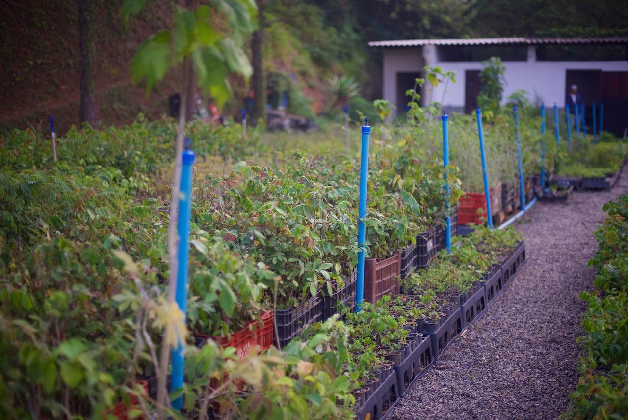 ITPA-tree-nursery--PACTO----1-1