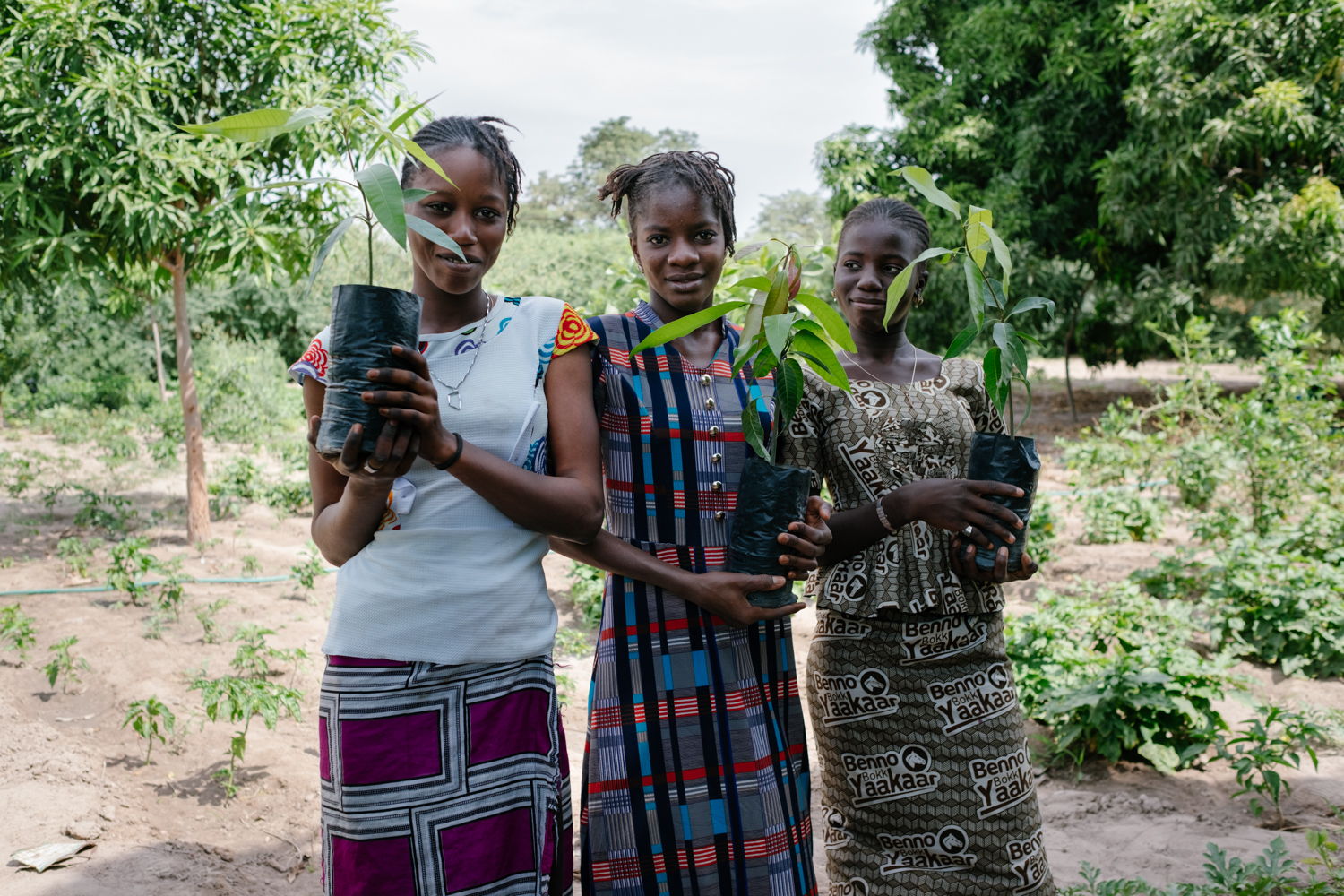 Senegal-Ecosia-Forest-Garden-Agroforestry-trees-climate-change--63-of-103-